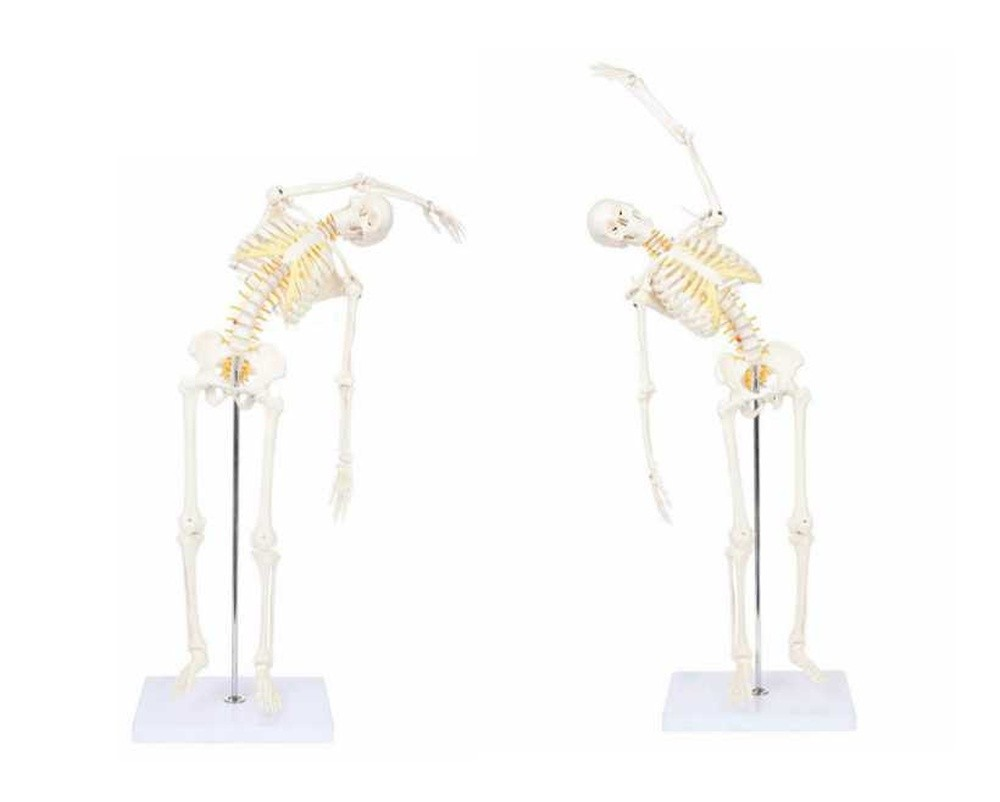 Skeleton, Mini, 85cm, Flexible