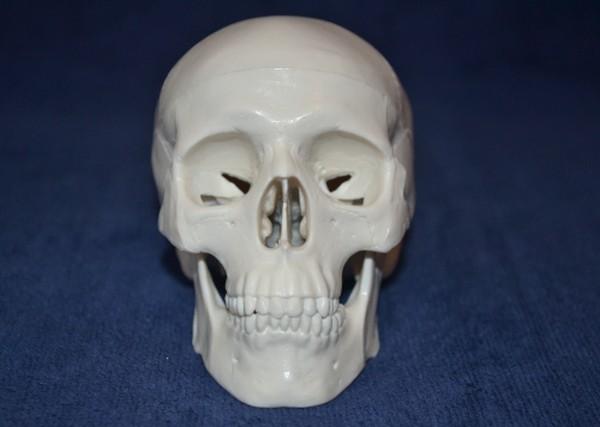 Skull, mini size