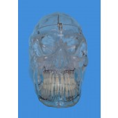 Skull Model, Transparent, Life Size